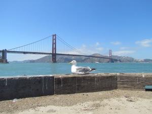 Golden Gate Bridge in sun